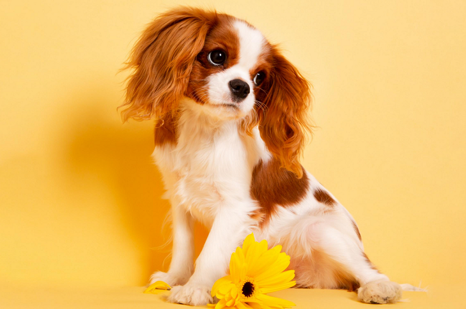 This image shows a dog that may have use CBD products that are designed for pets.