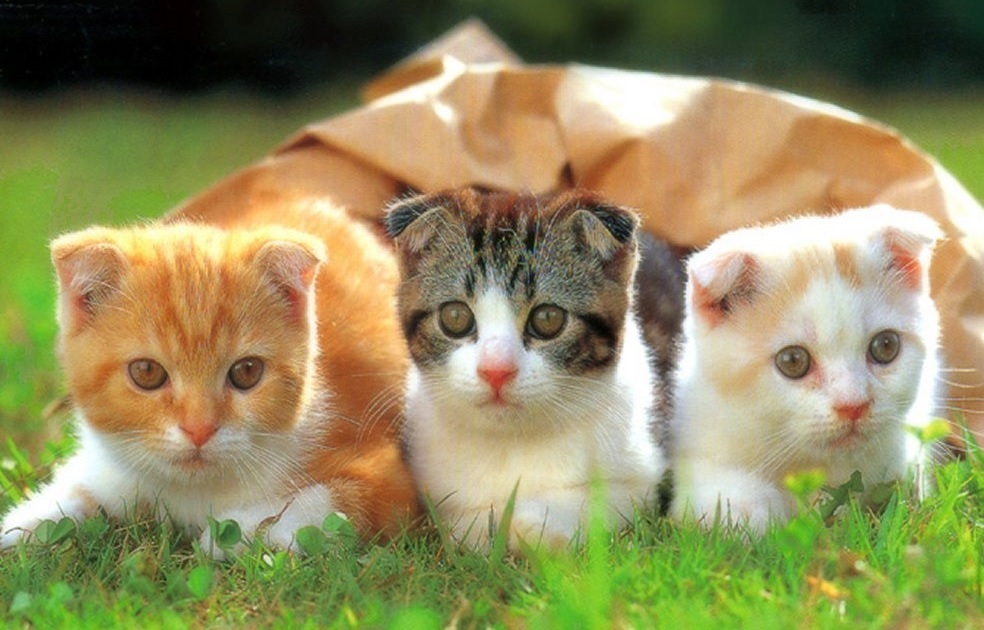 This image depicts 3 cats that have taken CBD oil for cats.